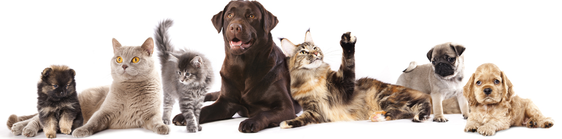 Animal Shelter Signs, Displays & Supplies