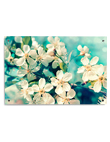 Wall Mounted Cherry Blossoms Printing on Acrylic