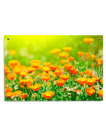Wall Mounted Orange Flower Print on Acrylic