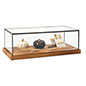 Wood glass tabletop keepsake display case with parawood base