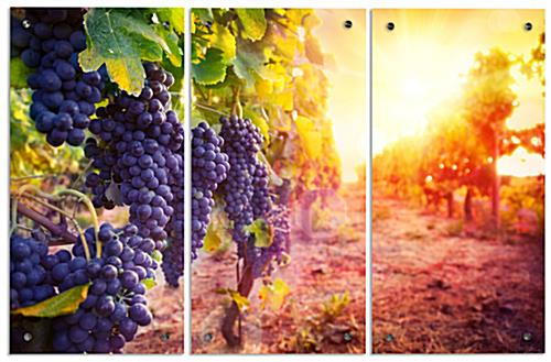 Wine Triptych with UV Printed Photo