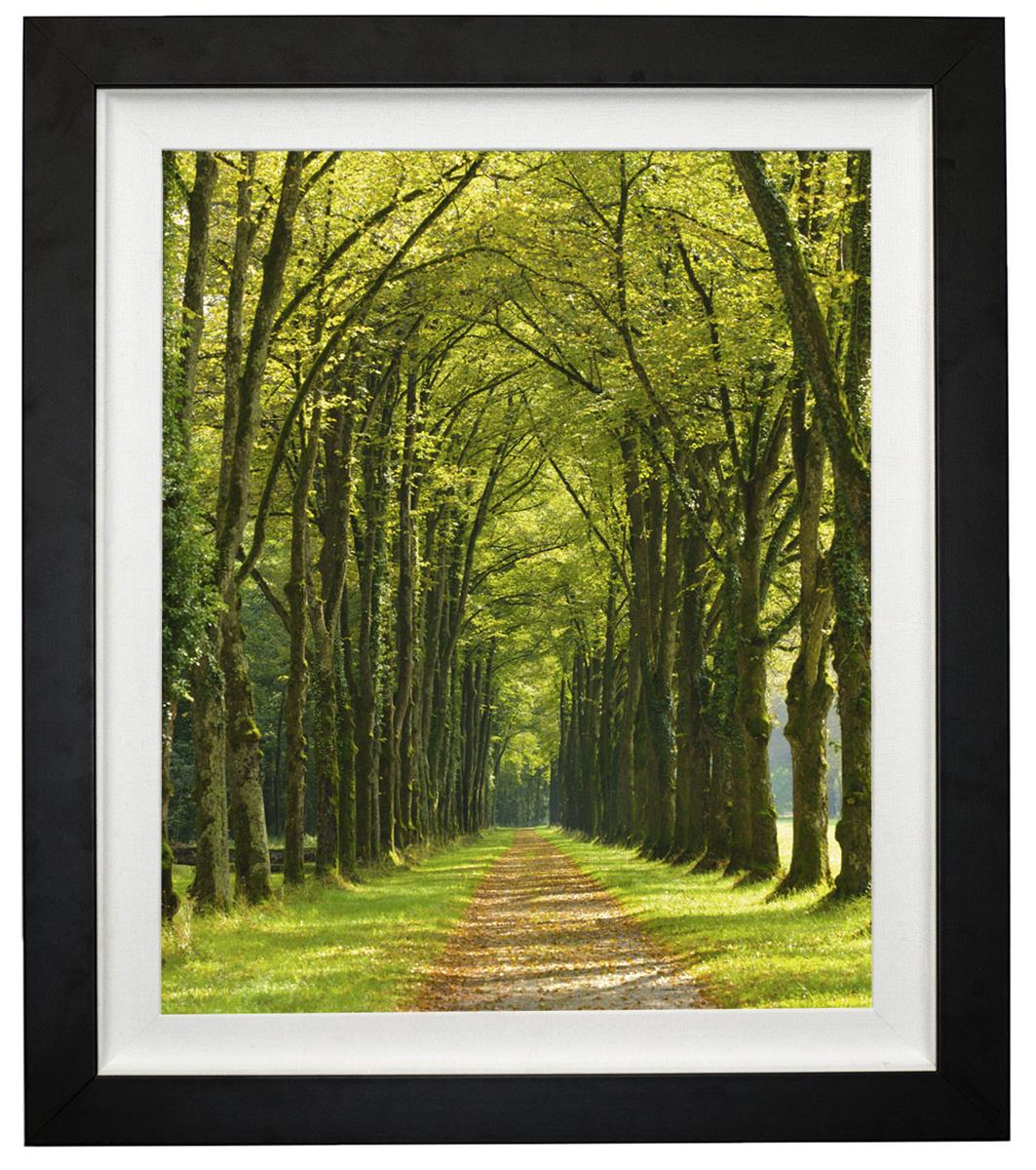"""30"""" x 40"""" Forest Print 